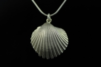 Fluted Cockle silver pendant